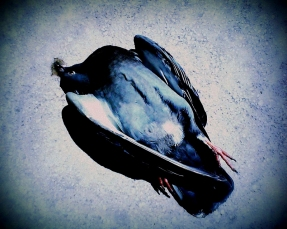 Dead Bird Blue 2010