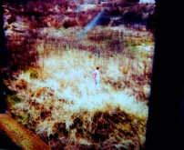 Feld in A Polaroid