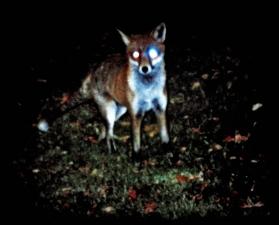 The Fox 2012