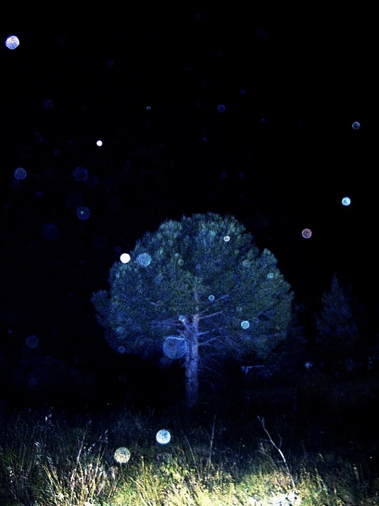 Night Scene 2013