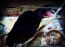 The Crow 2012