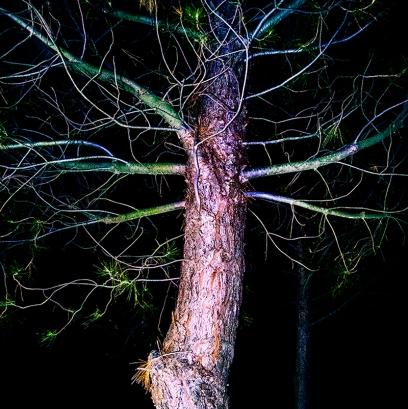Tree Throb 2013